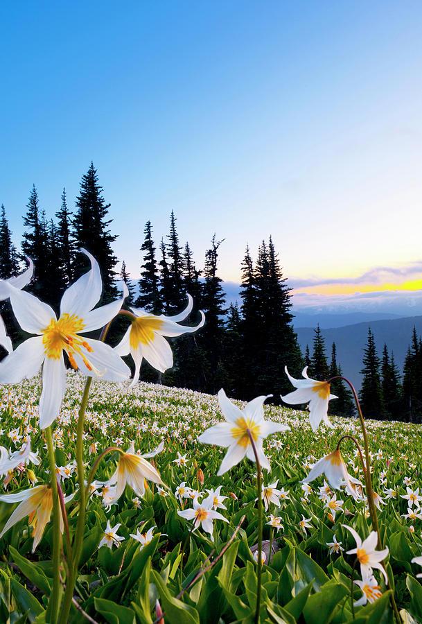 Abundance Photograph - Usa, Washington State, Olympic National by Gary Luhm