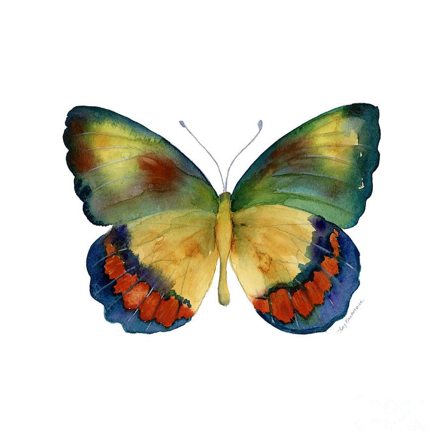 Butterfly Painting - 67 Bagoe Butterfly by Amy Kirkpatrick