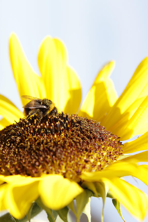 Bee Photograph - Bee On Flower by Les Cunliffe