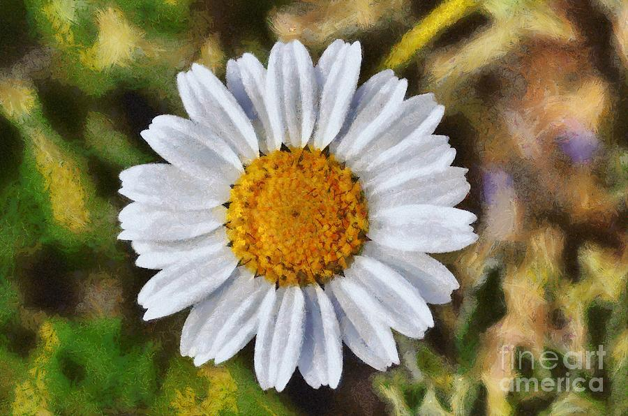 Daisy; Daisies; Anthemis Chia; White; Yellow; Flower; Flowers; Wild; Plant; Spring; Springtime; Season; Nature; Natural; Natural Environment; Natural World; Flora; Bloom; Blooming; Blossom; Blossoming; Color; Colour; Colorful; Colourful; Earth; Environment; Ecological; Ecology; Country; Landscape; Countryside; Scenery; Macro; Close-up; Detail; Details; Aesthetic; Aesthetics; Esthetic; Esthetics; Artistic; Beautiful; Beauty; Outdoor; Outside; Horizontal; Paint; Painting; Paintings Painting - Daisy by George Atsametakis