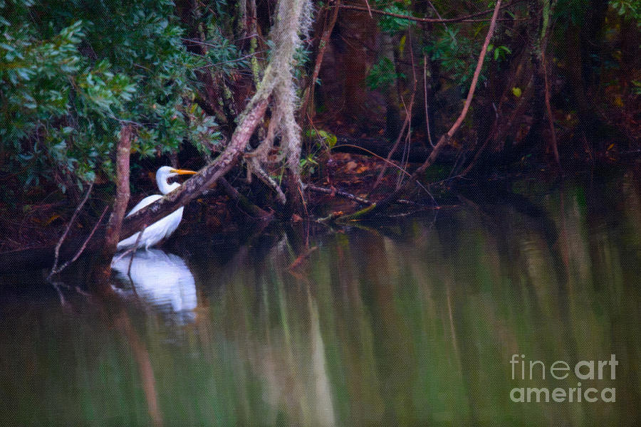 Great White Heron At Waters Edge Digital Art