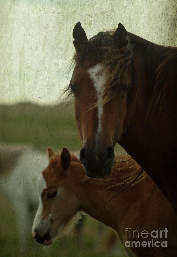Horse Photograph - Horses by Angel Ciesniarska