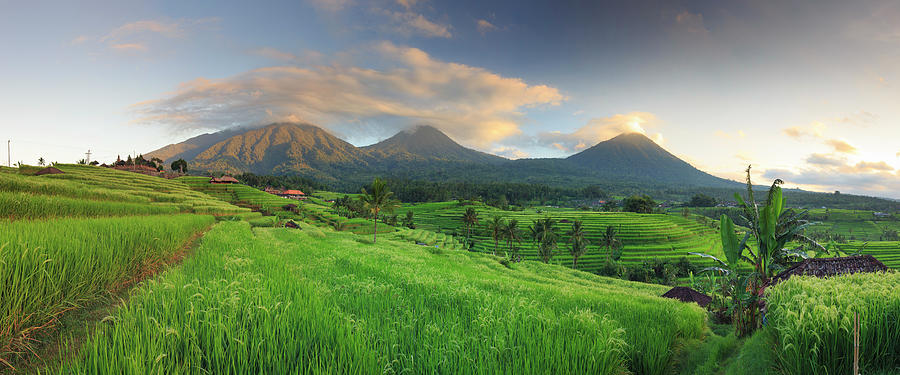 Indonesia, Bali, Rice Fields And Photograph by Michele Falzone