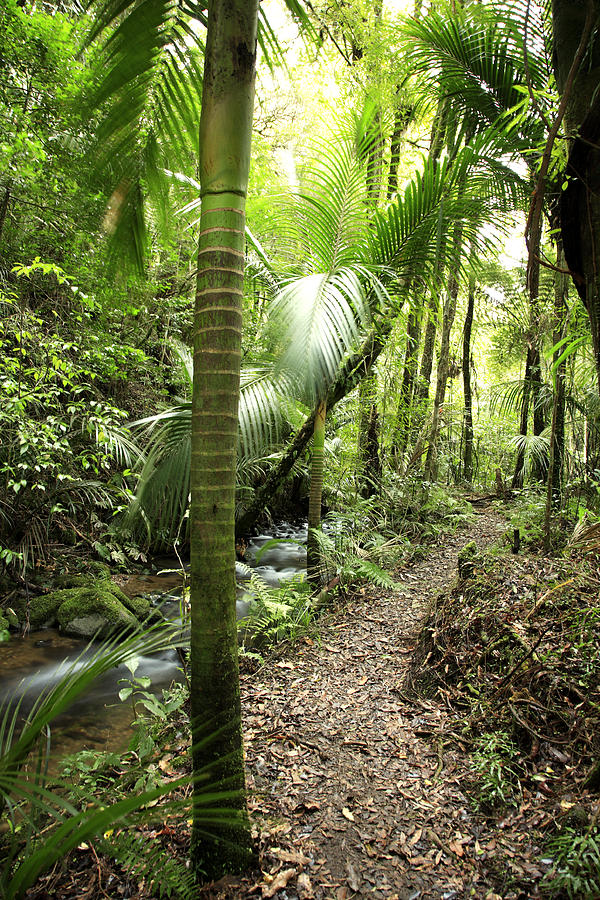 Forest Photograph - Jungle  by Les Cunliffe