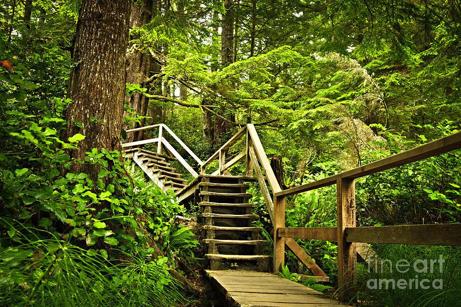 Rainforest Photograph - Path In Temperate Rainforest by Elena Elisseeva