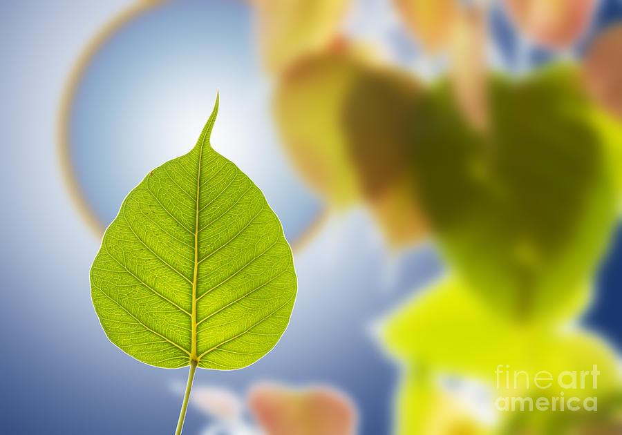 Autumn Mixed Media - Pho Or Bodhi by Atiketta Sangasaeng