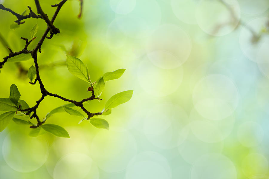 Tree Photograph - Spring Green by Nailia Schwarz