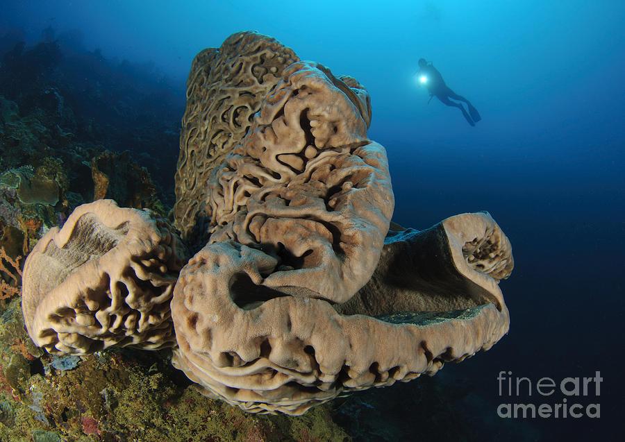 Invertebrate Photograph - The Salvador Dali Sponge With Intricate by Steve Jones