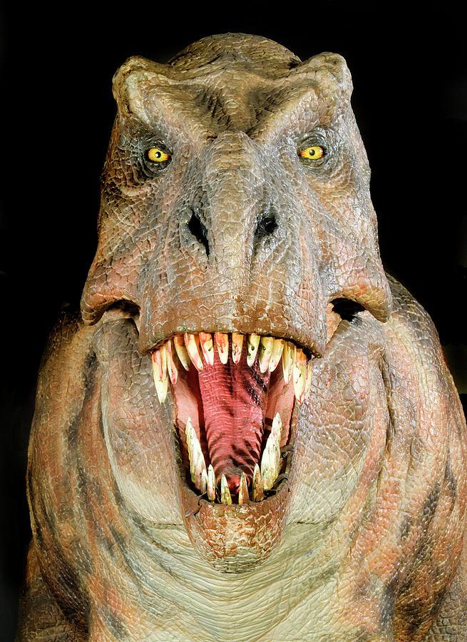 Tyrannosaurus Rex Photograph - Tyrannosaurus Rex Model by Natural History Museum, London/science Photo Library