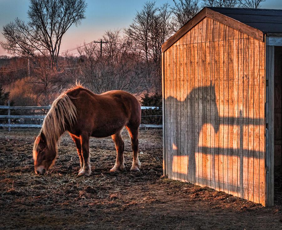 2014 Photograph - 7056 Horse Shadow by Deidre Elzer-Lento