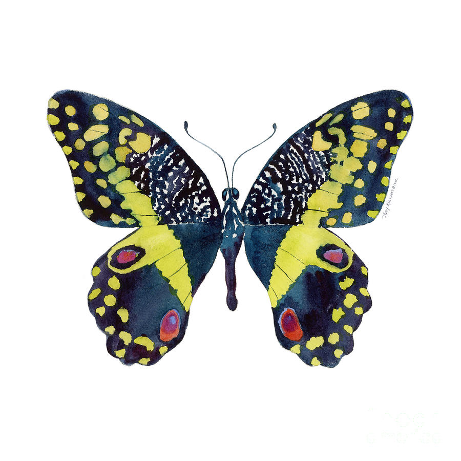Butterfly Painting - 73 Citrus Butterfly by Amy Kirkpatrick