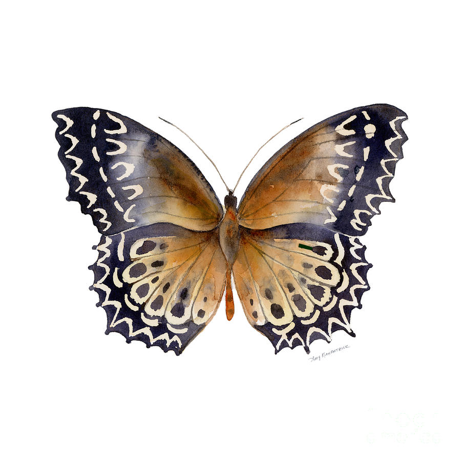 Moth Painting - 77 Cethosia Butterfly by Amy Kirkpatrick