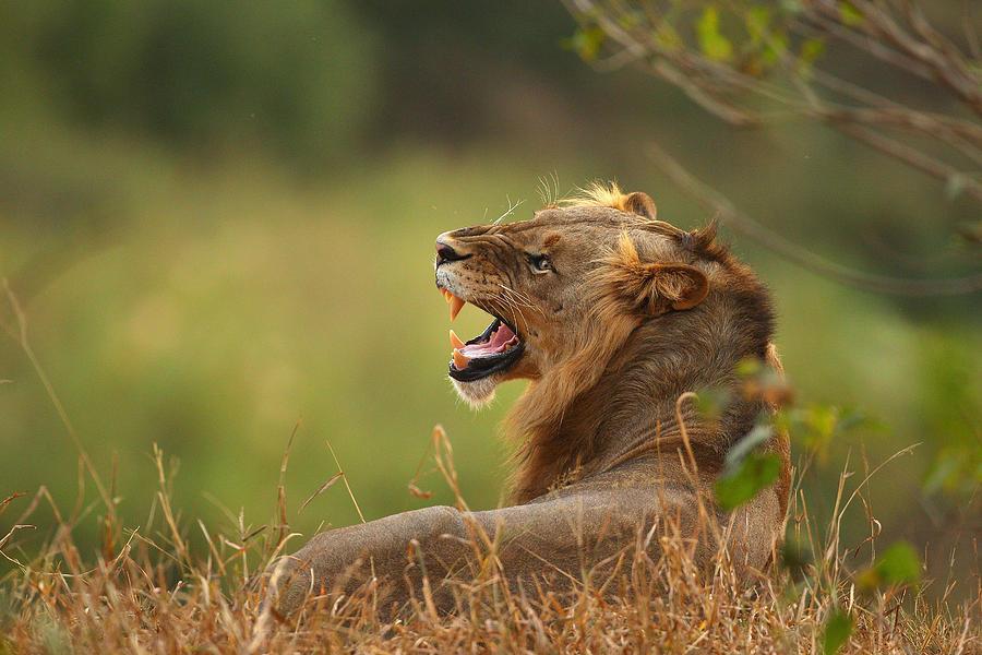 An African Safari Photograph by Cameron Spencer