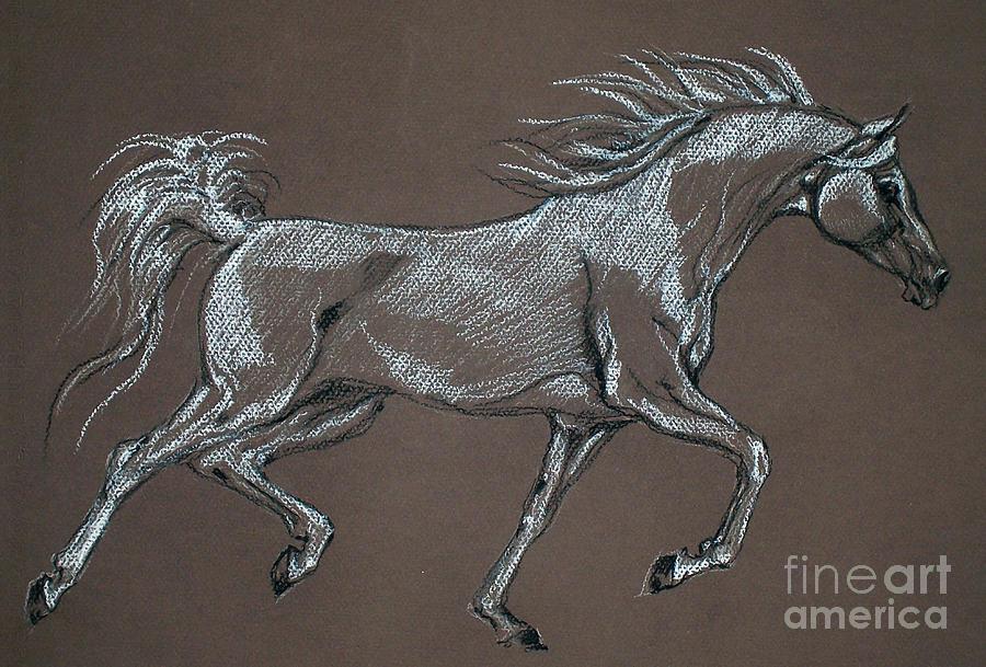 Horse Pastel - Arabian Horse  by Angel Ciesniarska