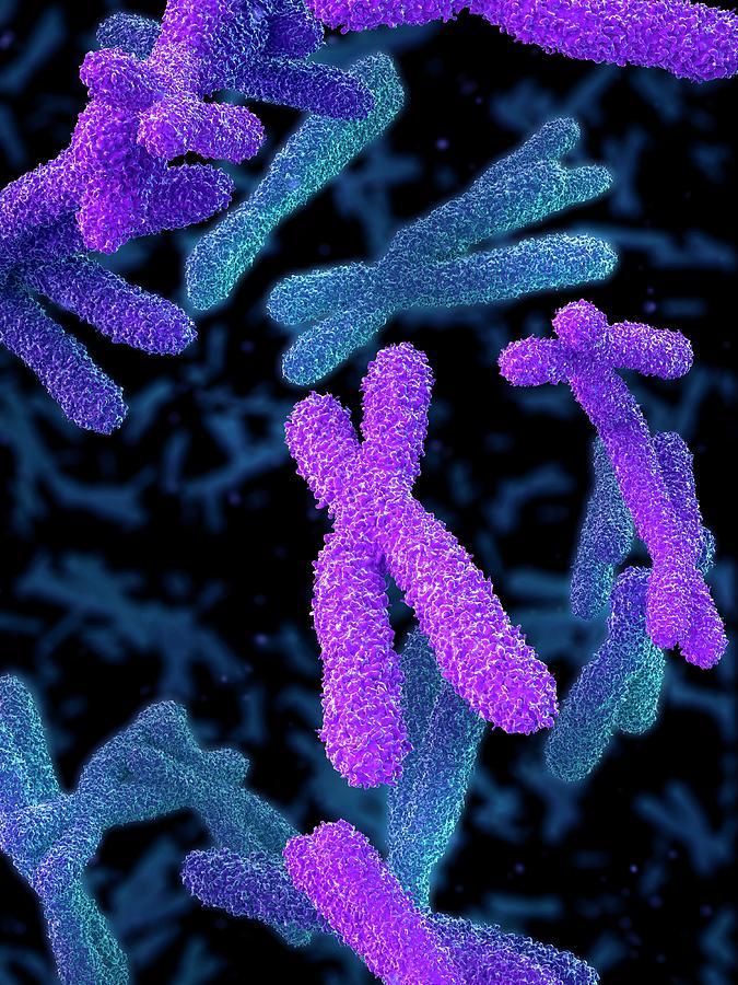 Artwork Photograph - Chromosomes by Maurizio De Angelis