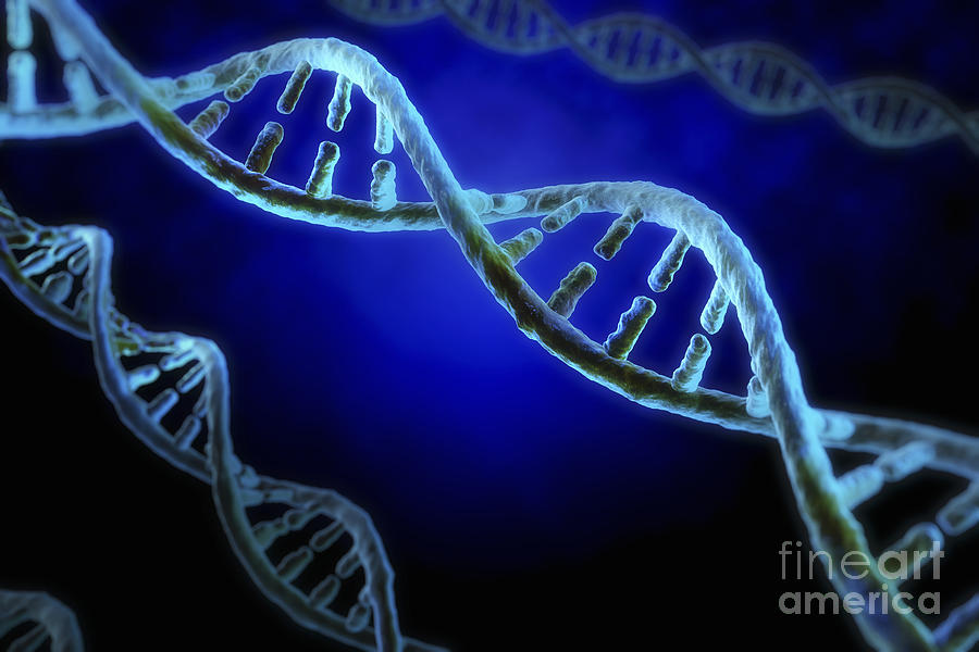 Dna Structure Photograph - Dna by Science Picture Co