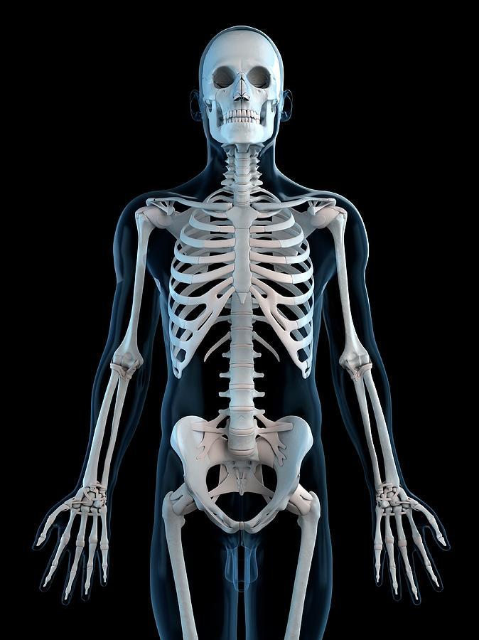 Human Skeleton, Artwork Digital Art by Sciepro