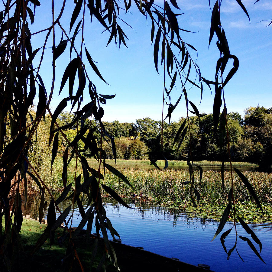 Lake Photograph - Leaves by Les Cunliffe