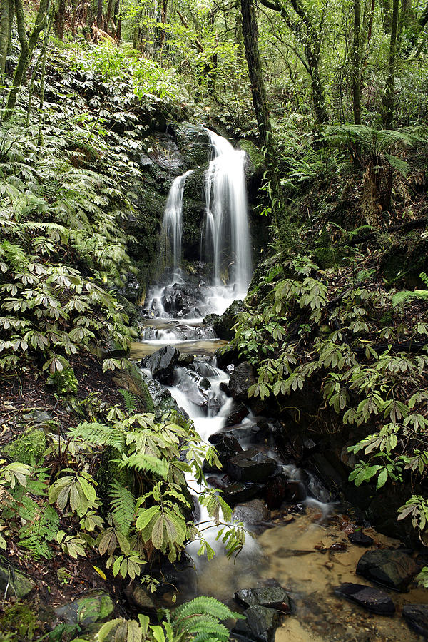 Rainforest Photograph - Waterfall by Les Cunliffe