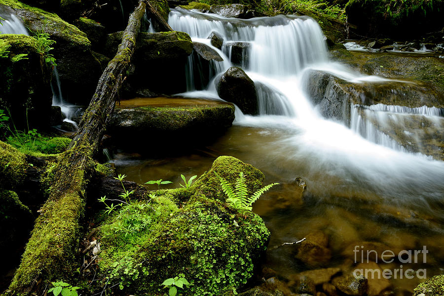 Spring Photograph - West Virginia Waterfall  by Thomas R Fletcher