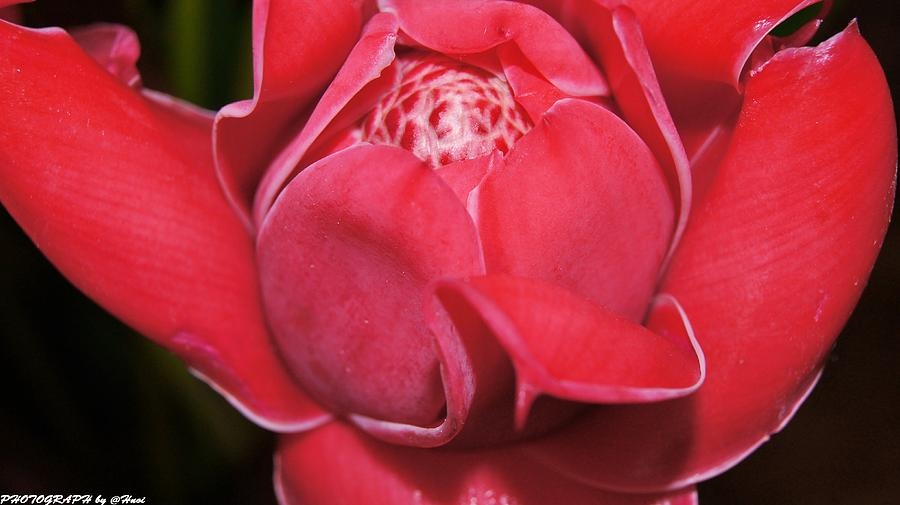 Flower For You  Photograph by Gornganogphatchara Kalapun