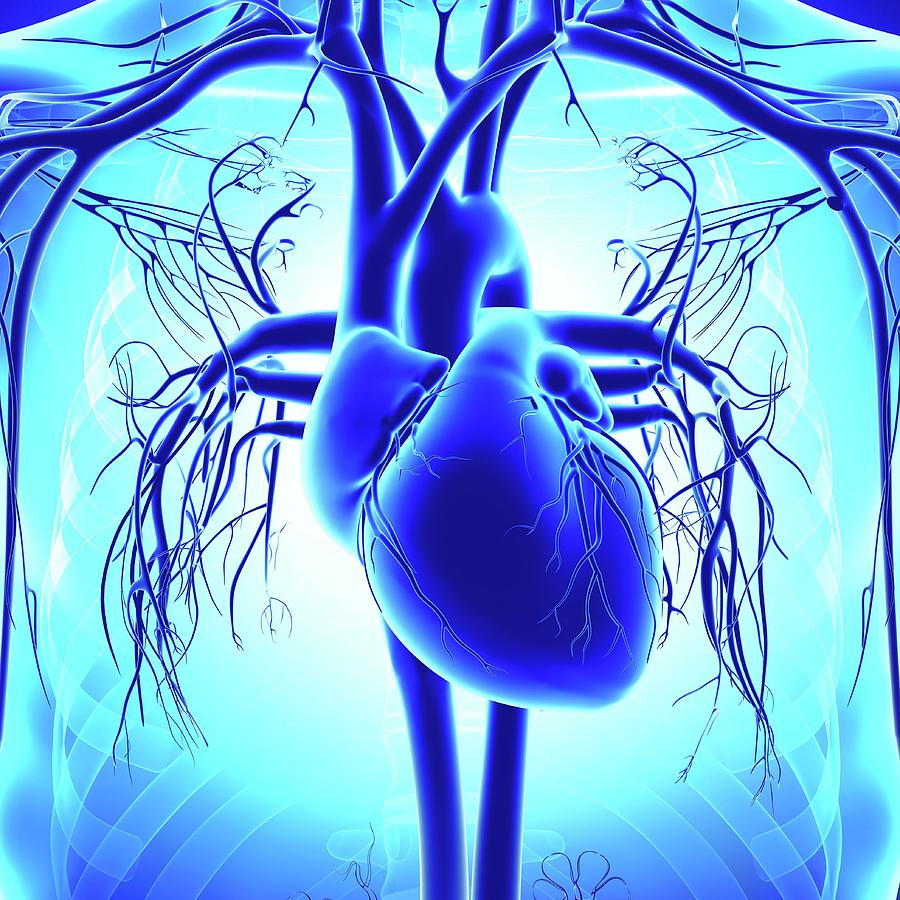 Artwork Photograph - Human Heart by Pixologicstudio/science Photo Library