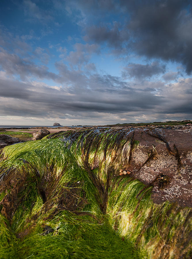 Berwick Photograph - Bass Rock by Keith Thorburn LRPS
