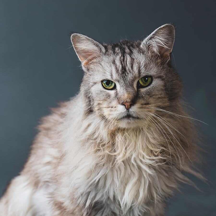 Fortunate Tails Photograph by Matt Porteous