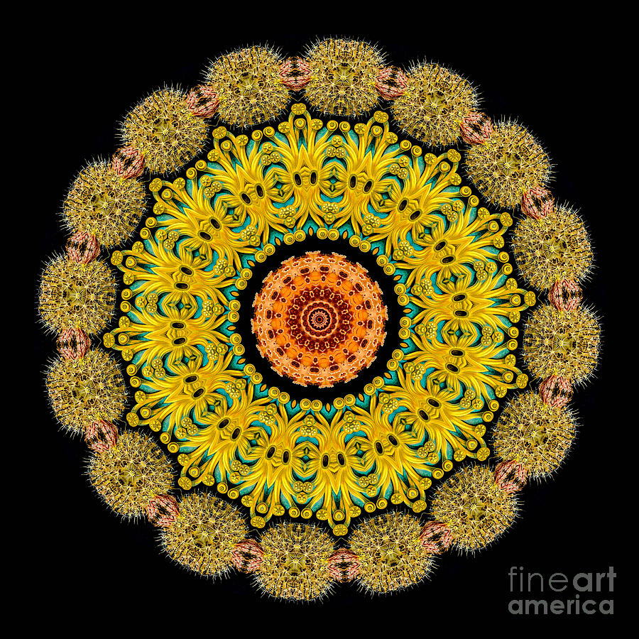 Ernst Haeckel Photograph - Kaleidoscope Ernst Haeckl Sea Life Series by Amy Cicconi