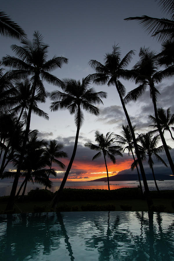 Vertical Photograph - Silhouette Of Palm Trees At Dusk by Panoramic Images