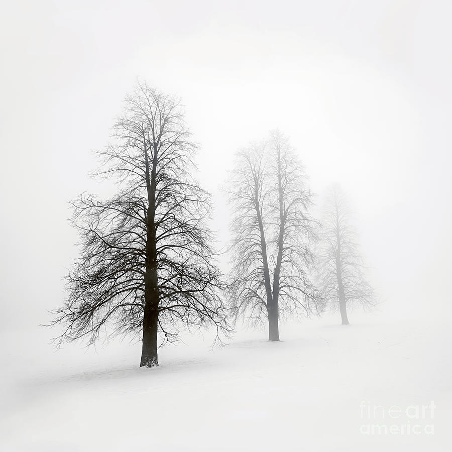 Winter Trees In Fog 1 Photograph