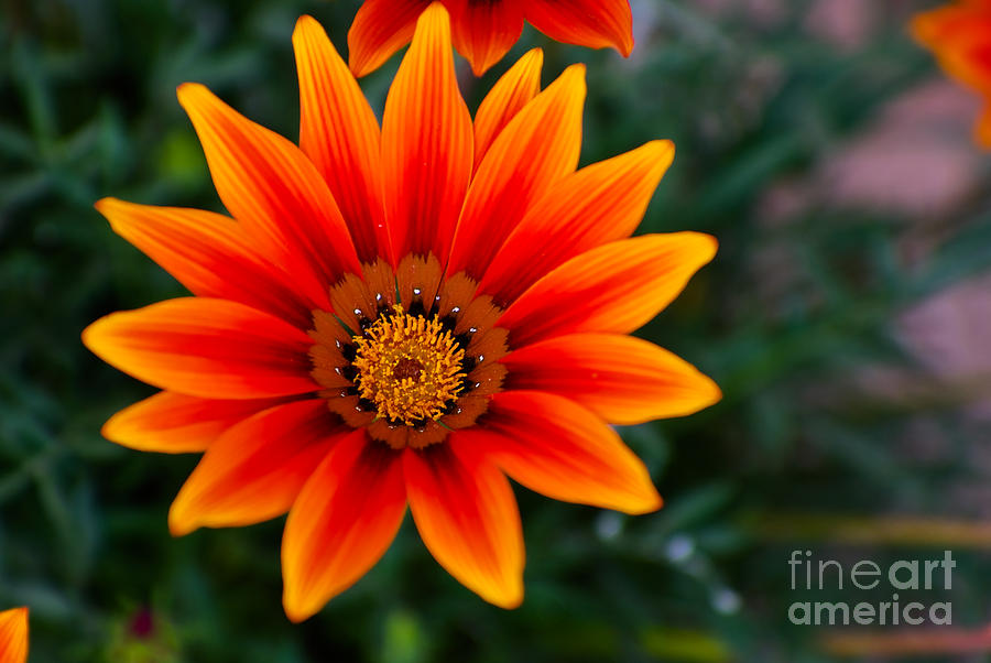 Flower Photograph - A Beautiful Beginning by Syed Aqueel