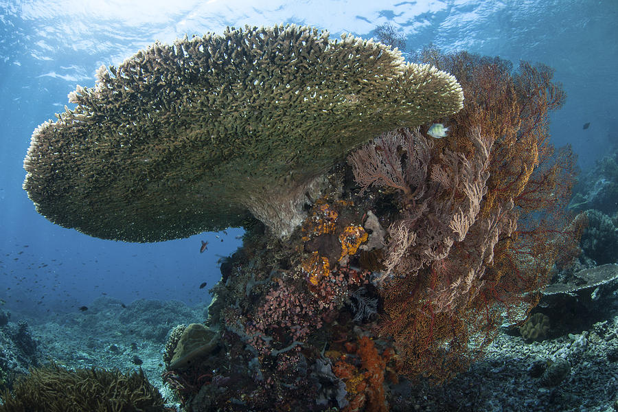 A Beautiful Coral Reef Thrives Photograph