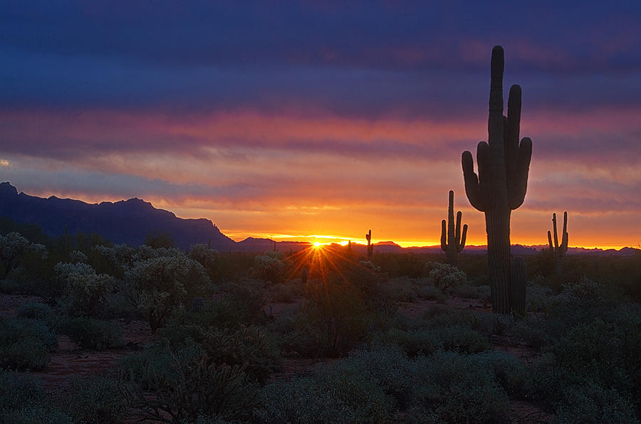 A Beautiful Desert Morning by Saija Lehtonen