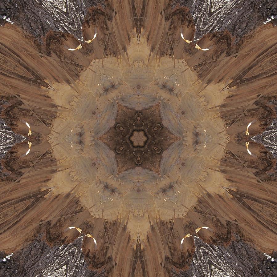 A Beaver's Work by Trina Stephenson