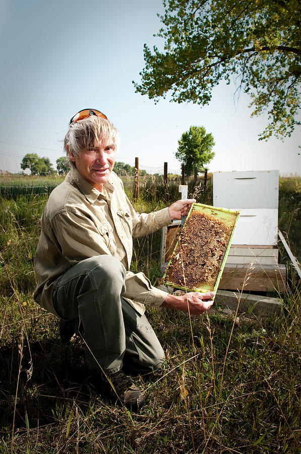 Adult Photograph - A Bee Keeper Checks On The Health by Randall Levensaler