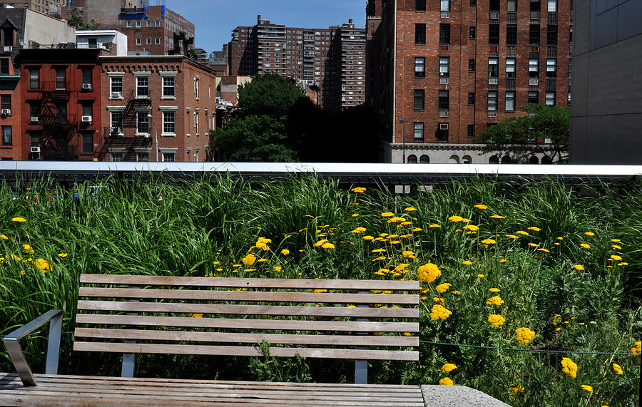 Bench Photograph - A Bench On The High Line In New York City by Diane Lent