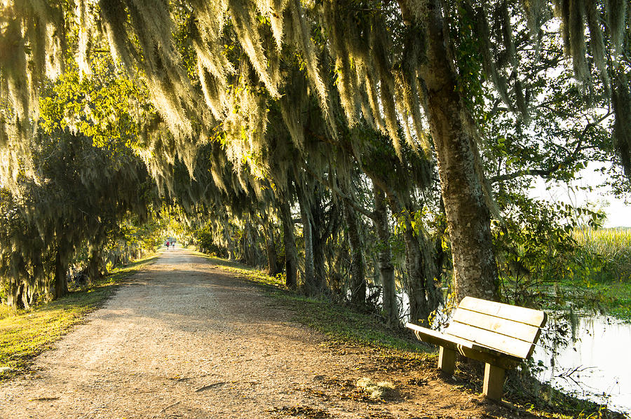 Autumn Photograph - A Bench Under Golden Spanish Moss by Ellie Teramoto