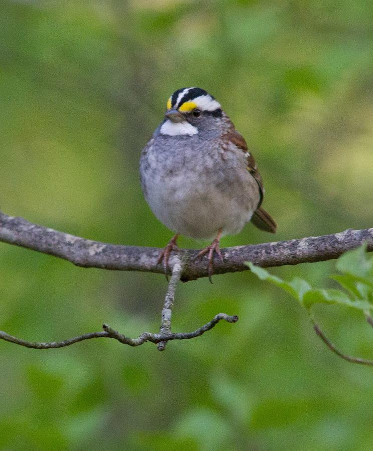 A Bird Photograph