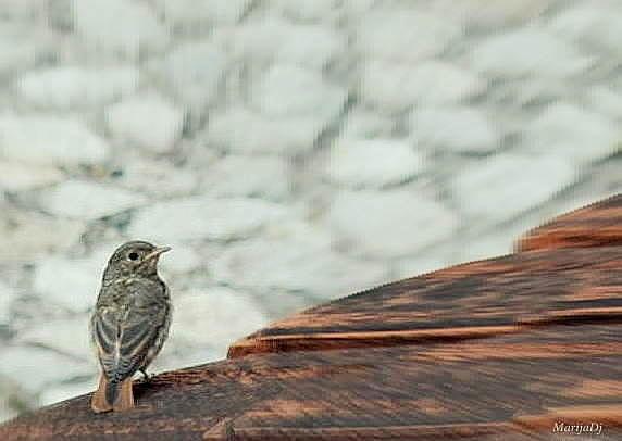 Birds Photograph - A Bird by Marija Djedovic