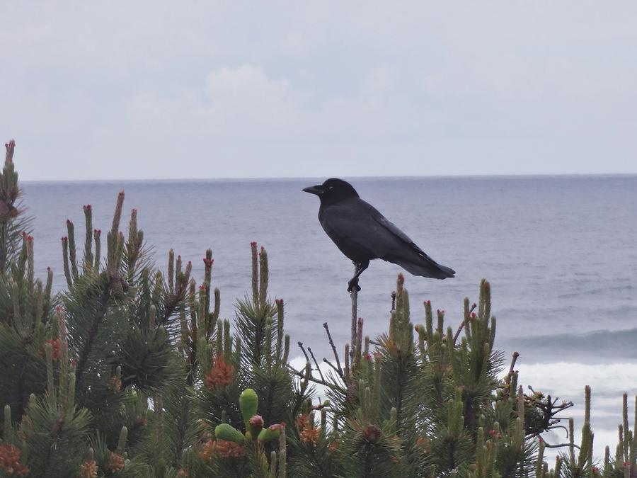 Crow Photograph - A Birds Watch  by Lizbeth Bostrom