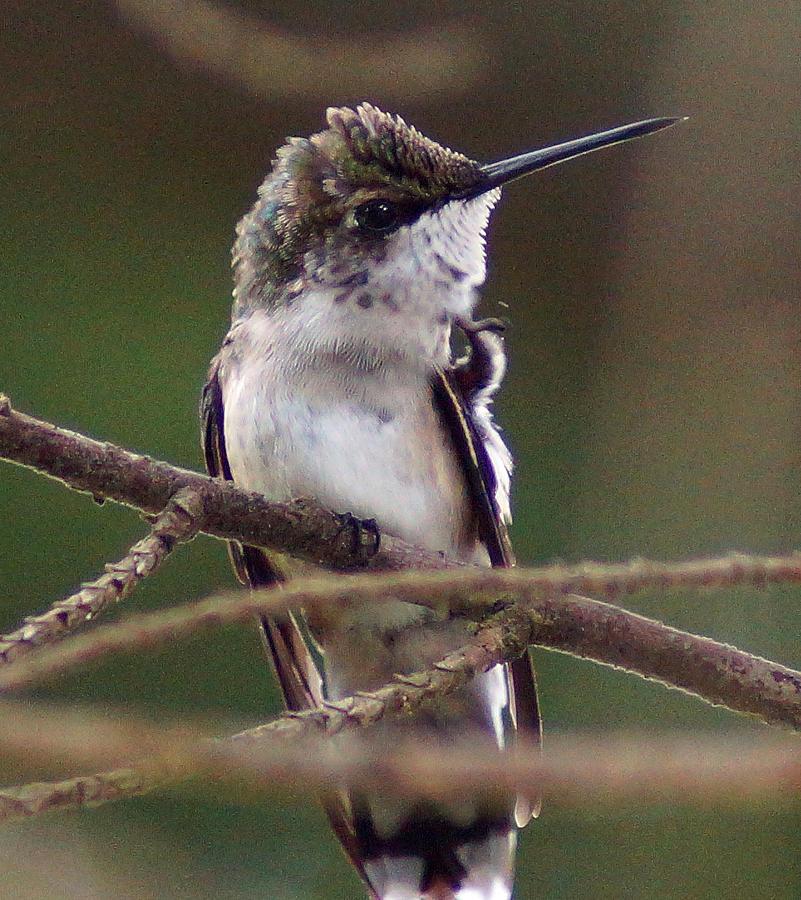 Bird Photograph - A Bit Of An Itch by Kim Pate