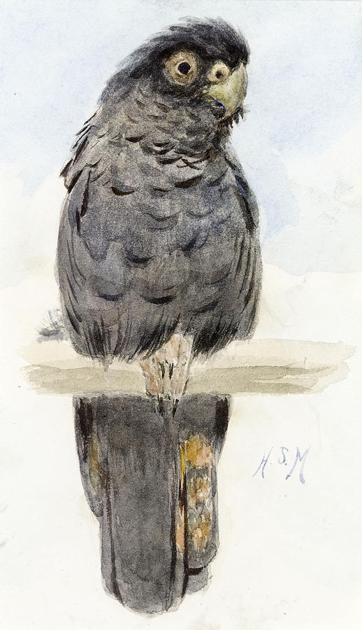 Cockatoo Painting - A Black Cockatoo by Henry Stacey Marks