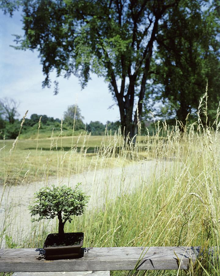 A Bonsai Tree In A Hayfield Photograph by Pedro E. Guerrero