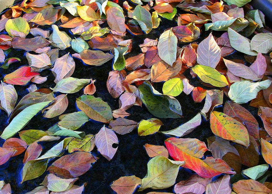 Autumn Photograph - A Bowl Of Autumn by Paula Tohline Calhoun