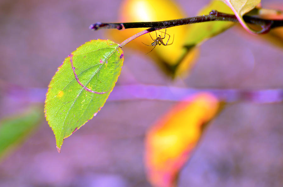 Leafs Photograph - A Branch With Leaves by Tommytechno Sweden