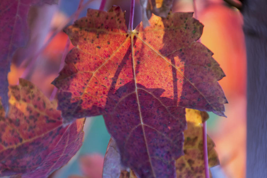 Leaves Photograph - A Breath Of Autumn by Dana Moyer