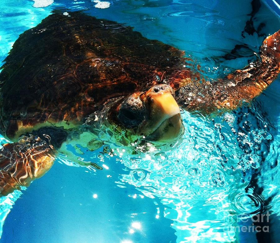 Turtle Photograph - A Breath Of Fresh Air by French Toast