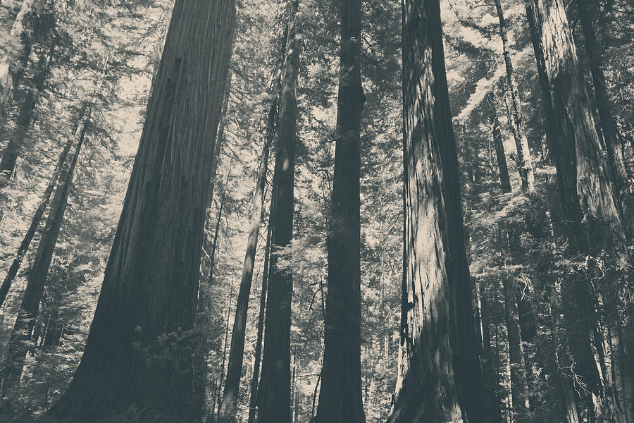 Humboldt Redwoods State Park Photograph - A Breath Of Fresh Air by Laurie Search