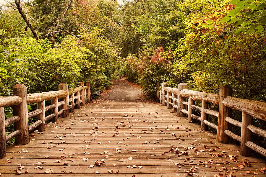 Bridge Photograph - A Bridge Into Autumn by Zev Steinhardt